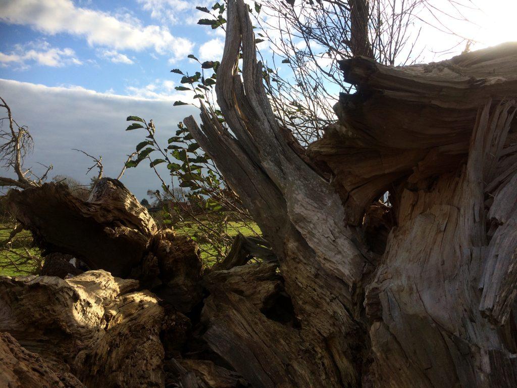 Mindfulness in de natuur